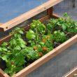 royal well broeikas sweet tomato tuinkas kweekkas hout glas geimpregneerd